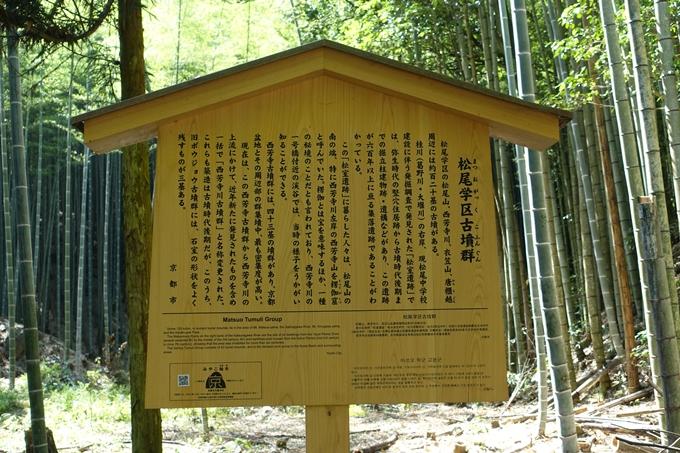 京都一周トレイル_西山 No17