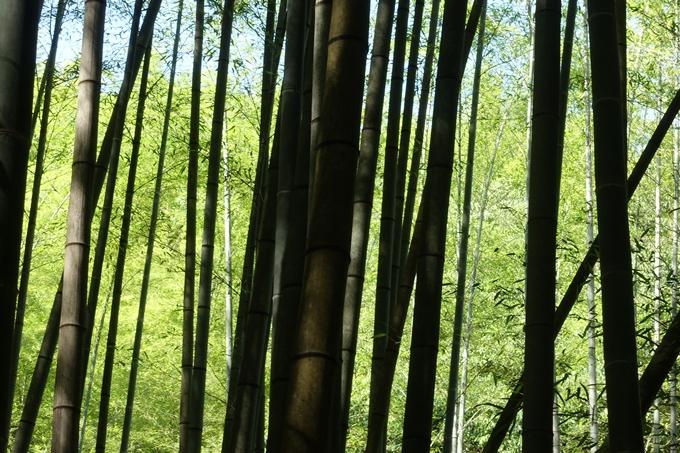 京都一周トレイル_西山 No22