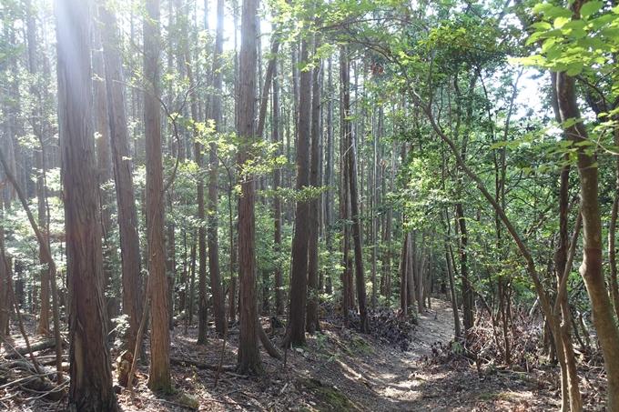 京都一周トレイル_西山 No52