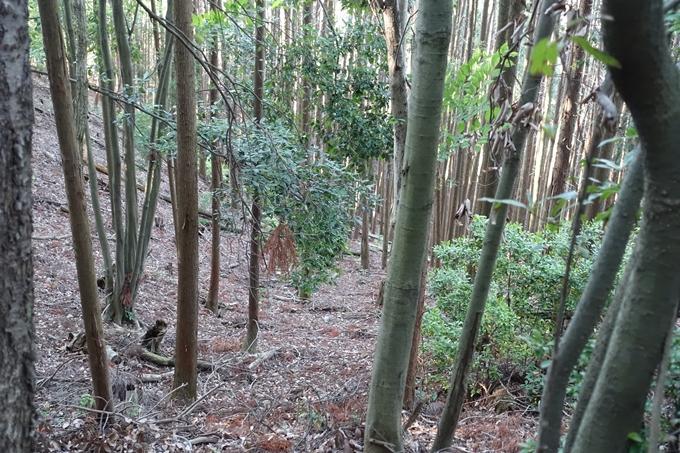 京都一周トレイル_西山 No81