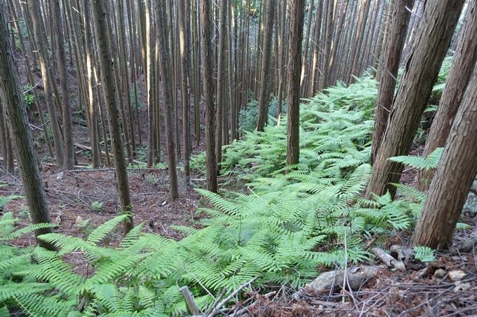 京都一周トレイル_西山 No82