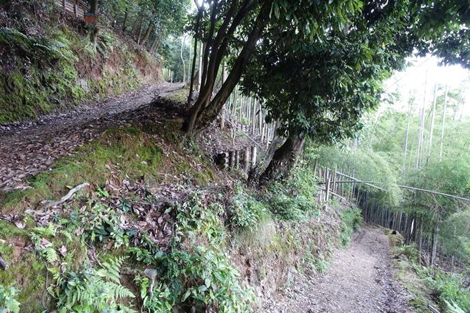 京都一周トレイル_西山 No87