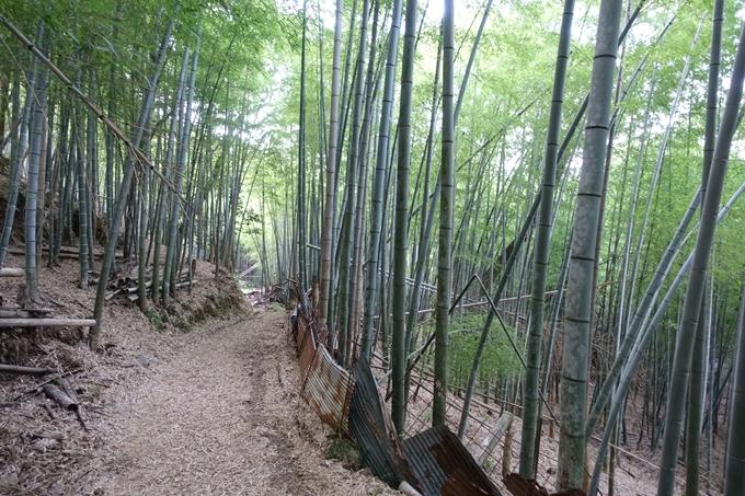 京都一周トレイル_西山 No88