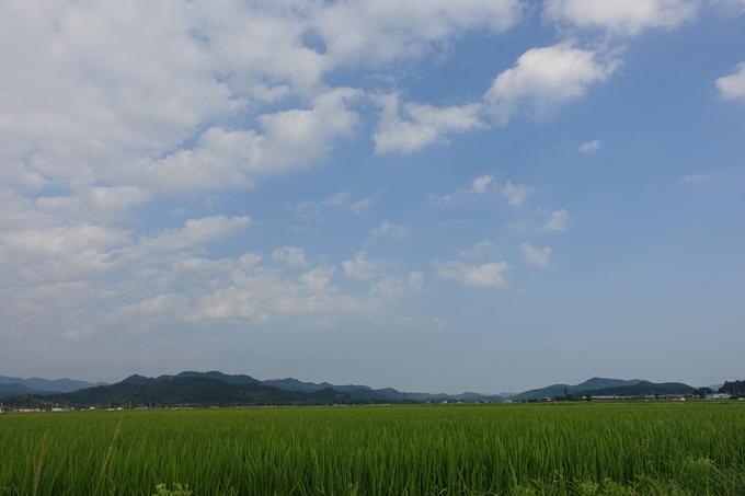 平の沢池_ハス No2