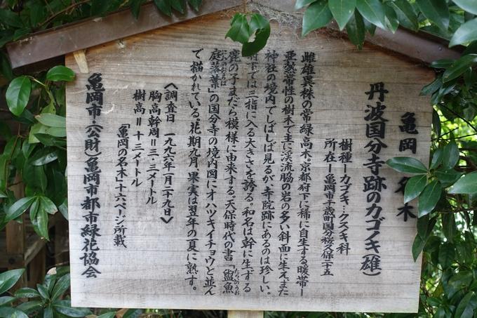 丹波国分寺跡 No29