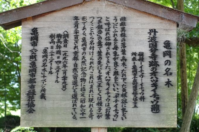 丹波国分寺跡 No31