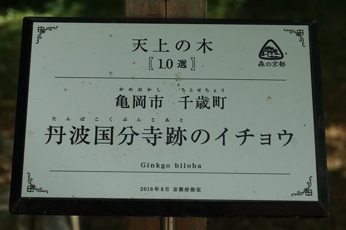 丹波国分寺跡 No32