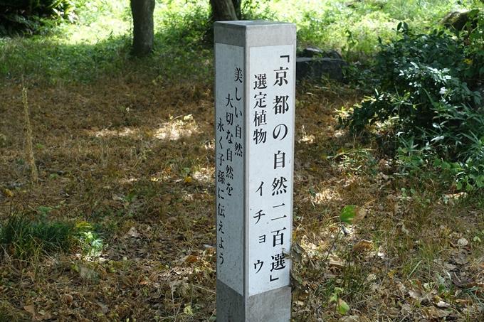 丹波国分寺跡 No33