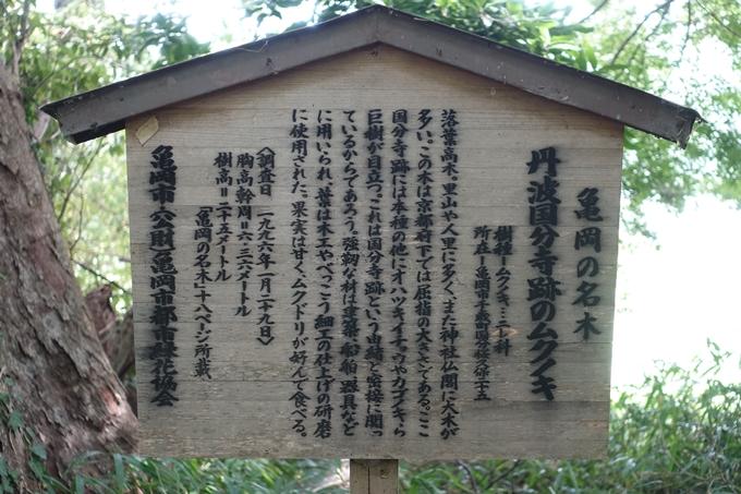 丹波国分寺跡 No35