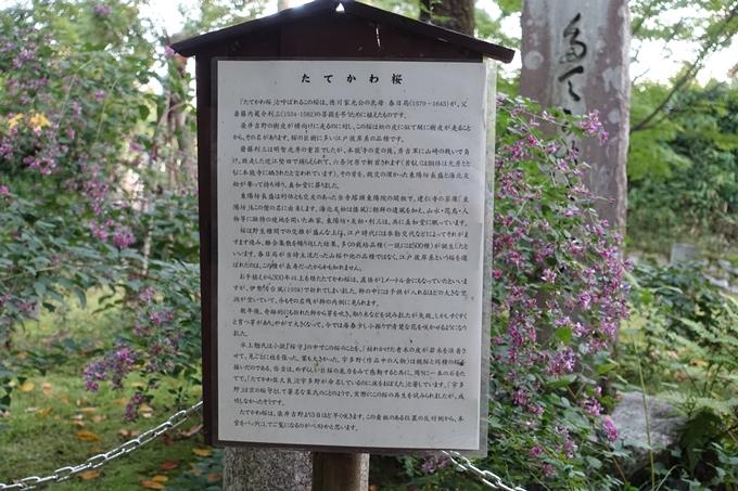 たてかわ桜 No7