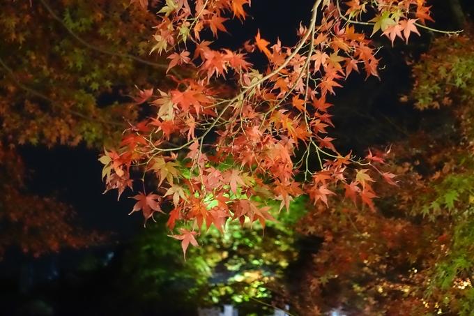 京都紅葉速報2018 その6 出雲神社_ライトアップ No6