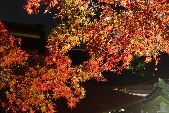 京都紅葉速報2018 その6 出雲神社_ライトアップ No17
