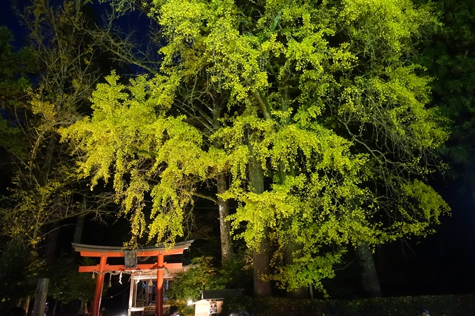 京都紅葉速報2018 その7 岩戸落葉神社_ライトアップ No9
