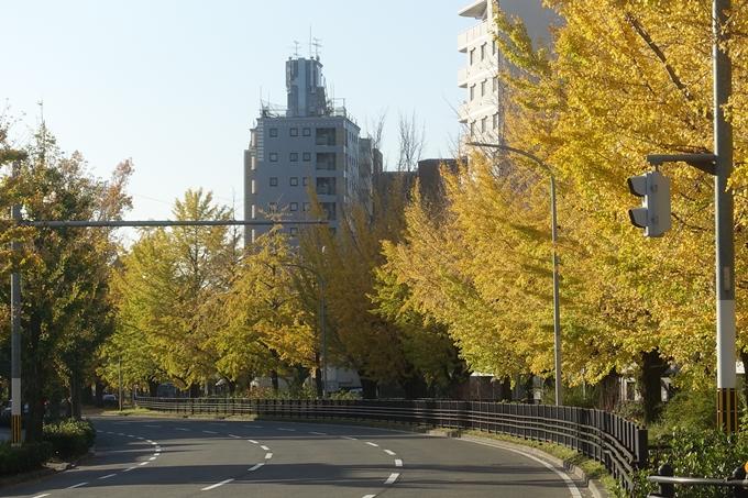 京都紅葉速報2018 その10 堀川街路樹のいちょう No8