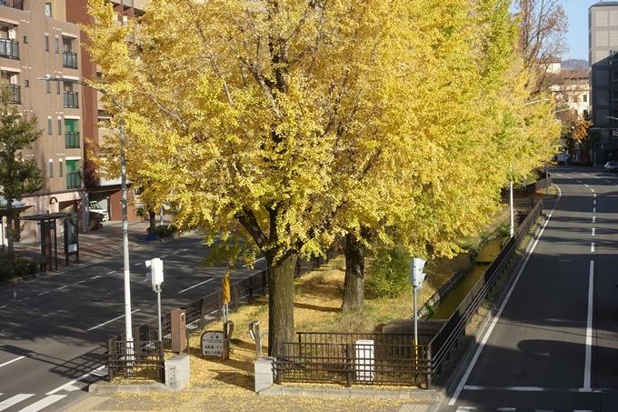 京都紅葉速報2018 その10 堀川街路樹のいちょう No21