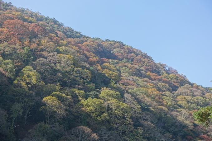 京都紅葉速報2018 その13 嵯峨嵐山 No22