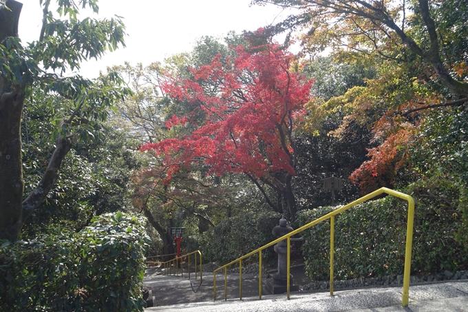 京都紅葉速報2018 その16 今宮神社・建勲神社 No15