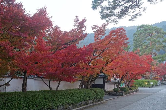 京都紅葉速報2018 その18 南禅寺・哲学の道 No5
