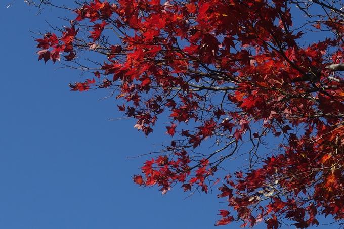 京都紅葉速報2018 その4 京都一周トレイル_東山・北山 No16