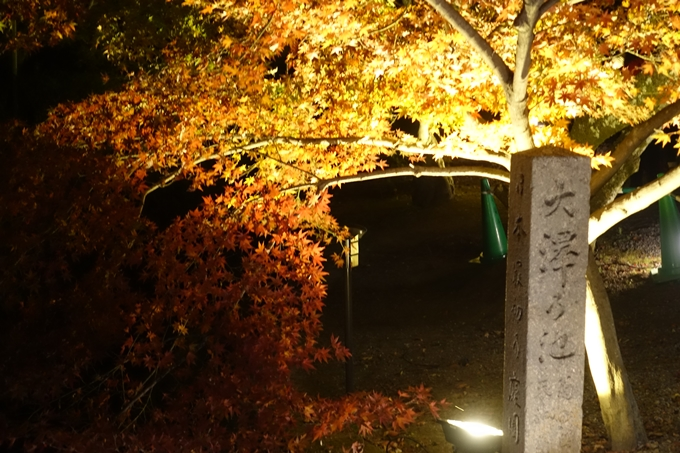 京都のライトアップ2018 大覚寺 No4
