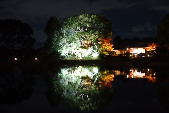 京都のライトアップ2018 大覚寺 No8