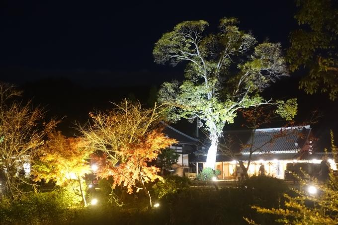 京都のライトアップ2018 大覚寺 No13