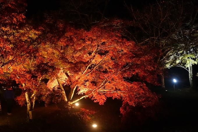 京都のライトアップ2018 大覚寺 No16