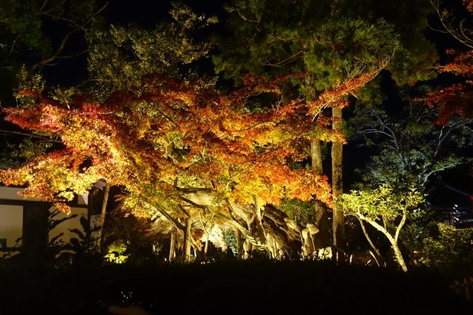 京都のライトアップ2018 大覚寺 No17