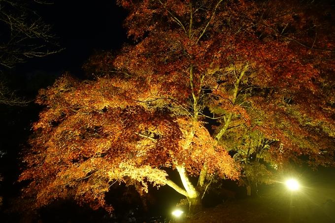 京都のライトアップ2018 大覚寺 No18