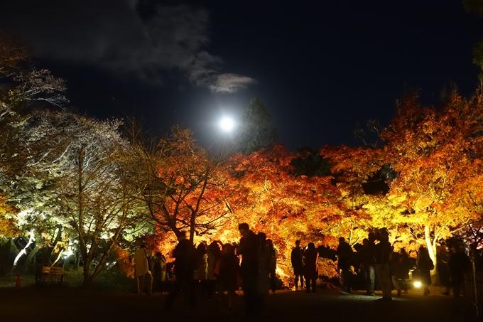 京都のライトアップ2018 大覚寺 No19