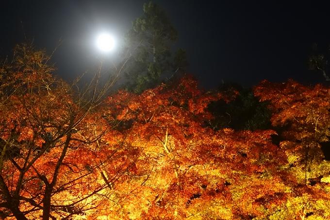 京都のライトアップ2018 大覚寺 No20