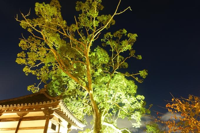 京都のライトアップ2018 大覚寺 No21