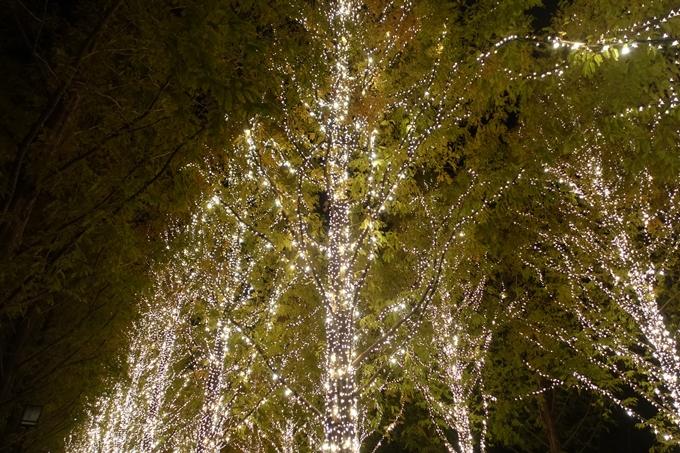 京都のライトアップ2018 ロームクリスマスイルミネーション No9