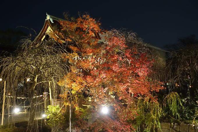 京都のライトアップ2018 北野天満宮 No6