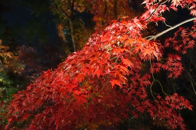 京都のライトアップ2018 北野天満宮 No19