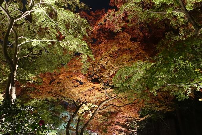 京都のライトアップ2018 北野天満宮 No21