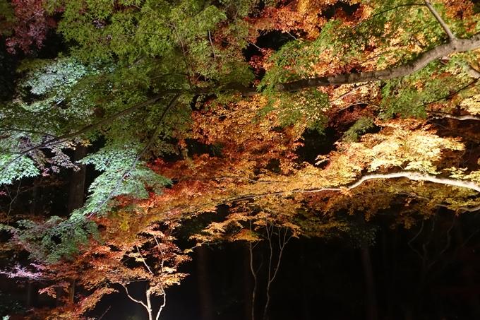 京都のライトアップ2018 北野天満宮 No22