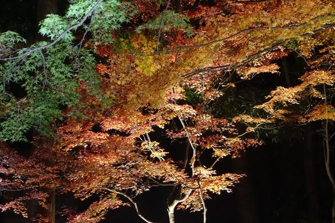 京都のライトアップ2018 北野天満宮 No23