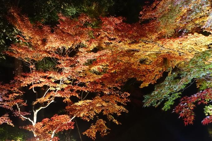 京都のライトアップ2018 北野天満宮 No24