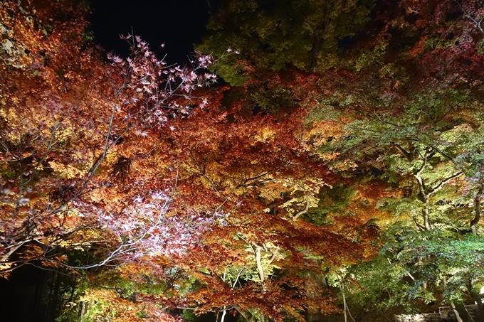 京都のライトアップ2018 北野天満宮 No25