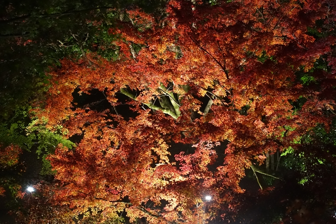 京都のライトアップ2018 北野天満宮 No28