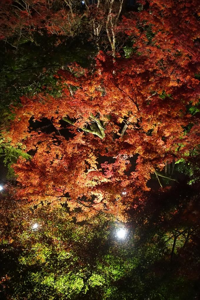 京都のライトアップ2018 北野天満宮 No29