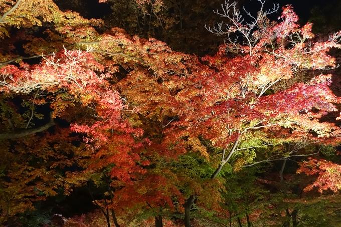 京都のライトアップ2018 北野天満宮 No32