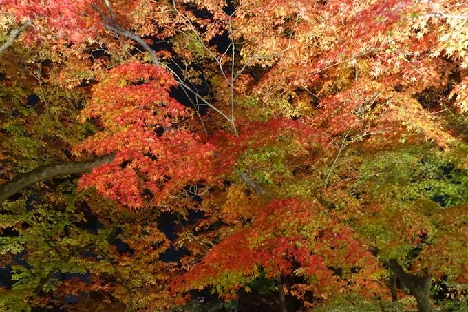 京都のライトアップ2018 北野天満宮 No33