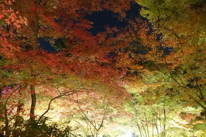 京都のライトアップ2018 北野天満宮 No34