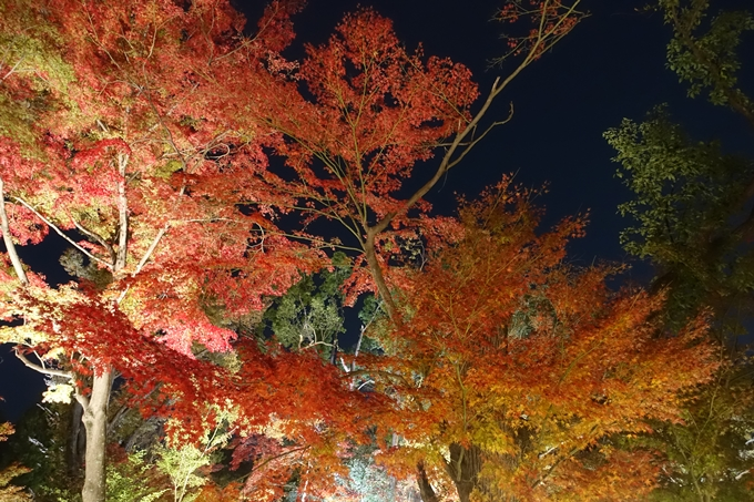 京都のライトアップ2018 北野天満宮 No37