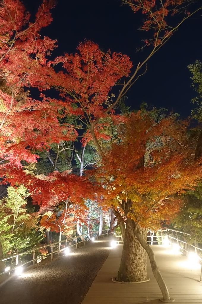京都のライトアップ2018 北野天満宮 No38