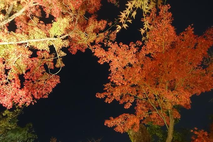 京都のライトアップ2018 北野天満宮 No39