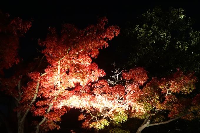 京都のライトアップ2018 梅小路公園 紅葉まつり No2