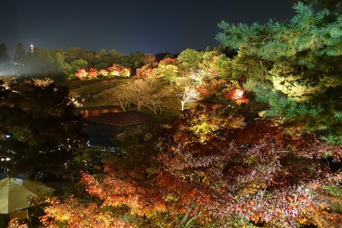 京都のライトアップ2018 梅小路公園 紅葉まつり No5